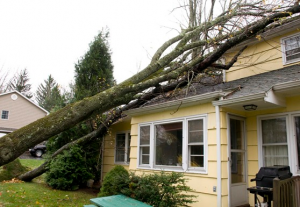 tree-damages-house